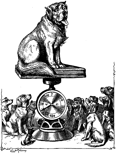 giant-dog-being-weighed-on-a-scale-peer-review-outstanding-stand-out-heavy